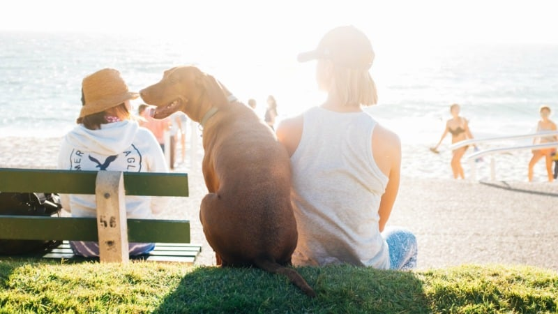 Happy family on the beach with dog celebrating the best way to spend their tax refund